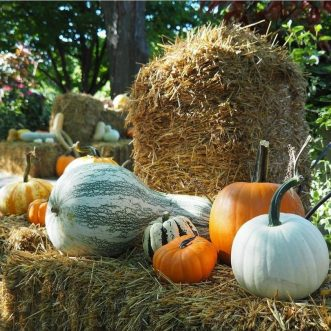 Minnesota Landscape Arboretum: Shop the Fall Harvest!